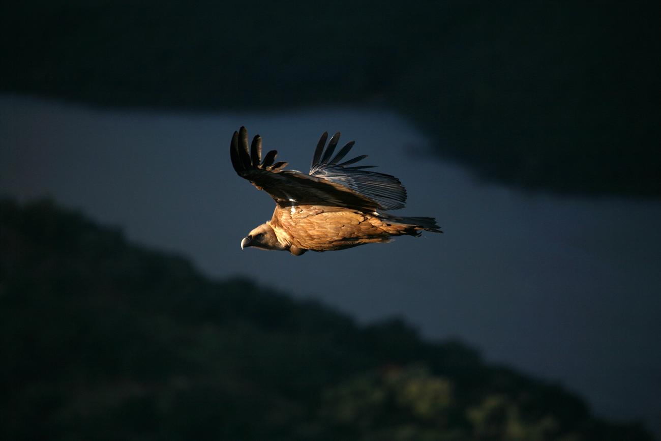 Salida fotográfica al Parque Nacional de Monfragüe 1-3 octubre - David Santiago, Landscape Photography