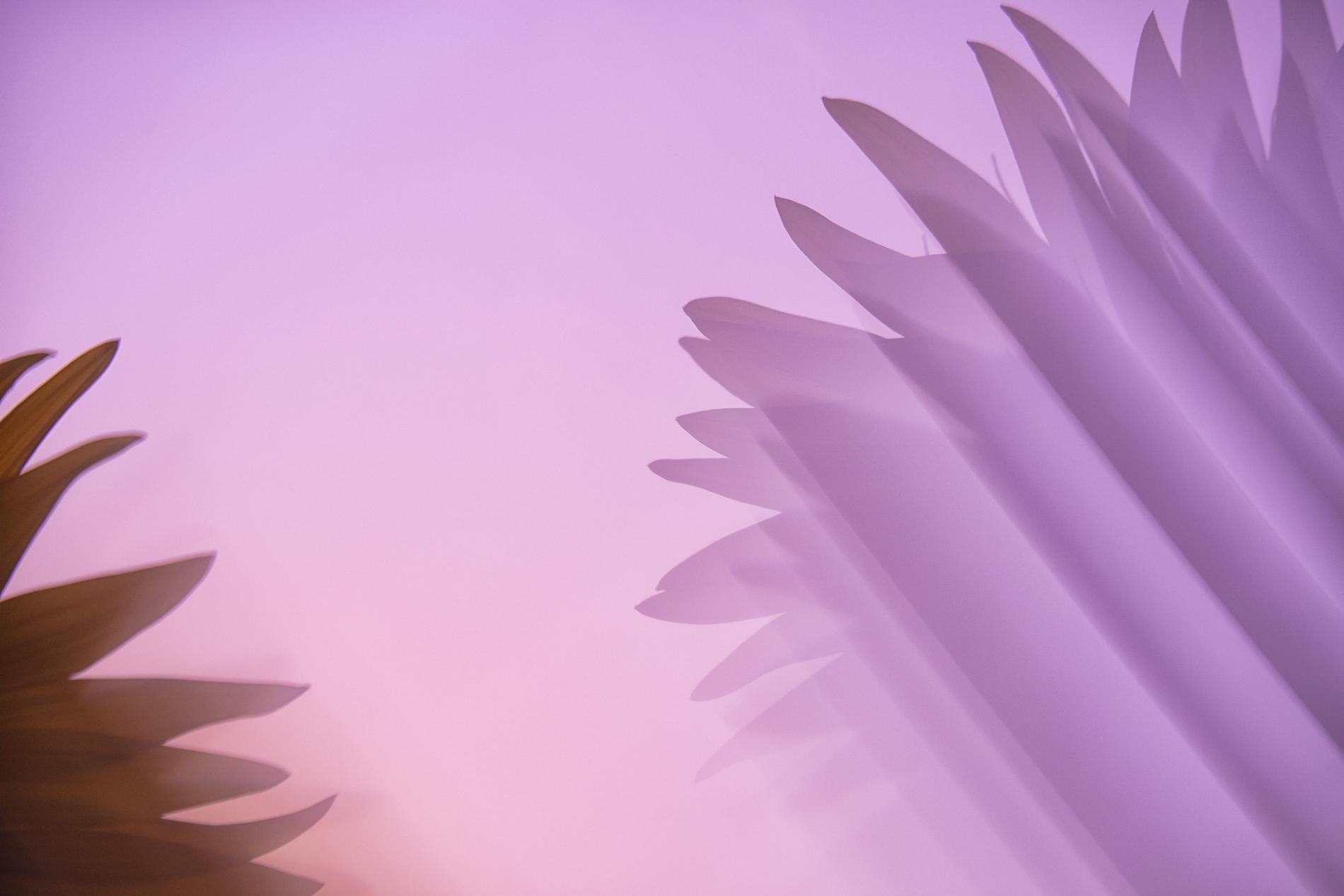 GIRASOLES - David Santiago, Landscape Photography