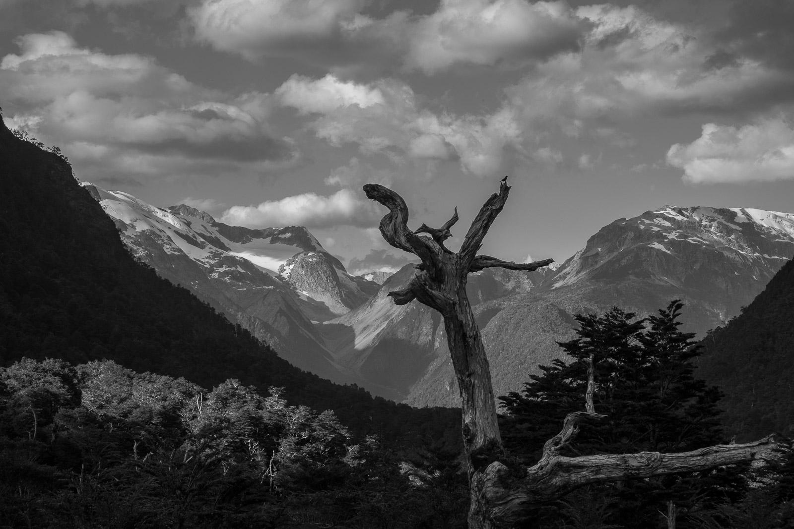 El Lobo, Parque Nacional Queulat, Carretera Austral. Aysén. - Aysén - Eduardo Cerda. Fotografías de Aysén.Chile.