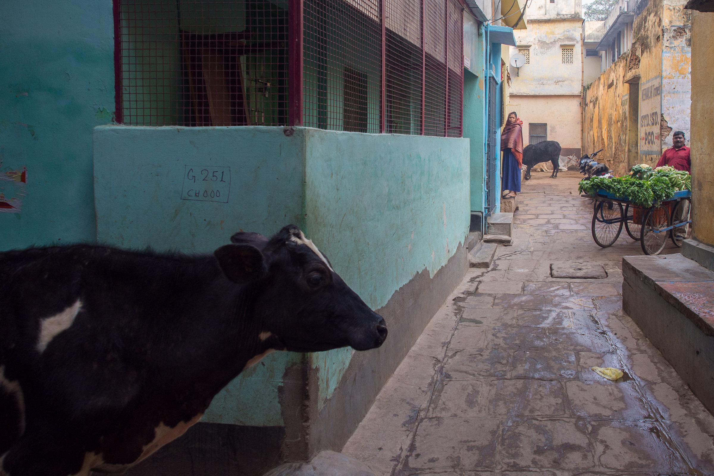 India mon amour - India photography