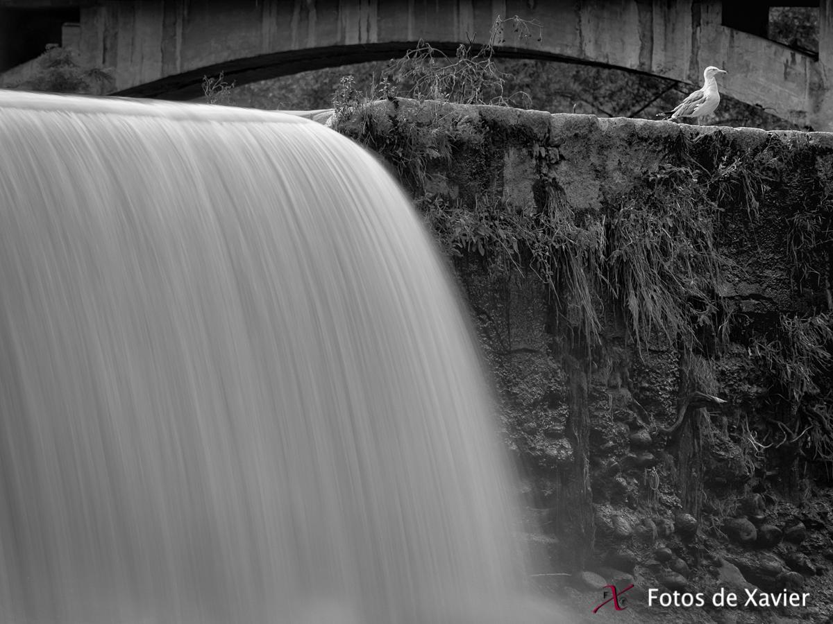 A la vora del Ter - Blanco y negro - Fotos de Xavier. Fotografia de naturaleza y paisaje en blanco y negro. Xavier Linares