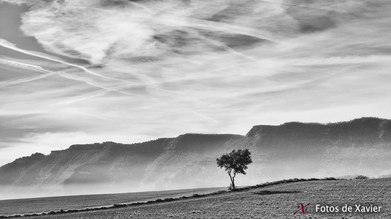 La Plana - Blanco y negro - Fotos de Xavier. Fotografia de naturaleza y paisaje en blanco y negro. Xavier Linares