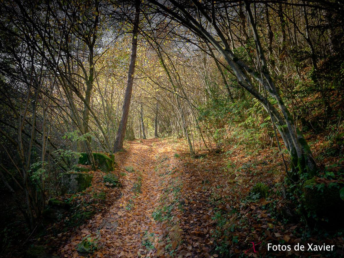 Tardor - Luz - Fotos de Xavier. Fotografia de naturaleza y paisaje. Xavier Linares