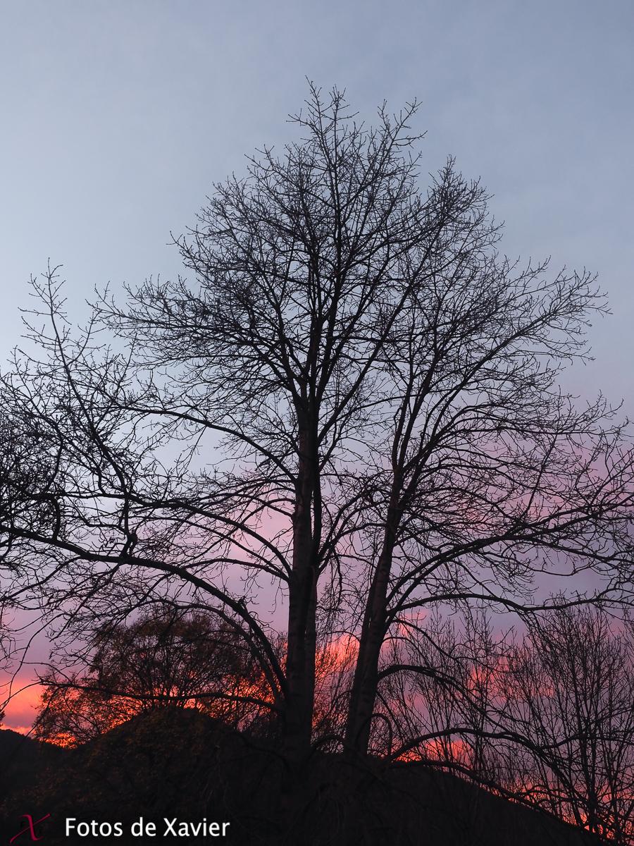 Llums de capvespre - Luz - Fotos de Xavier. Fotografia de naturaleza y paisaje. Xavier Linares