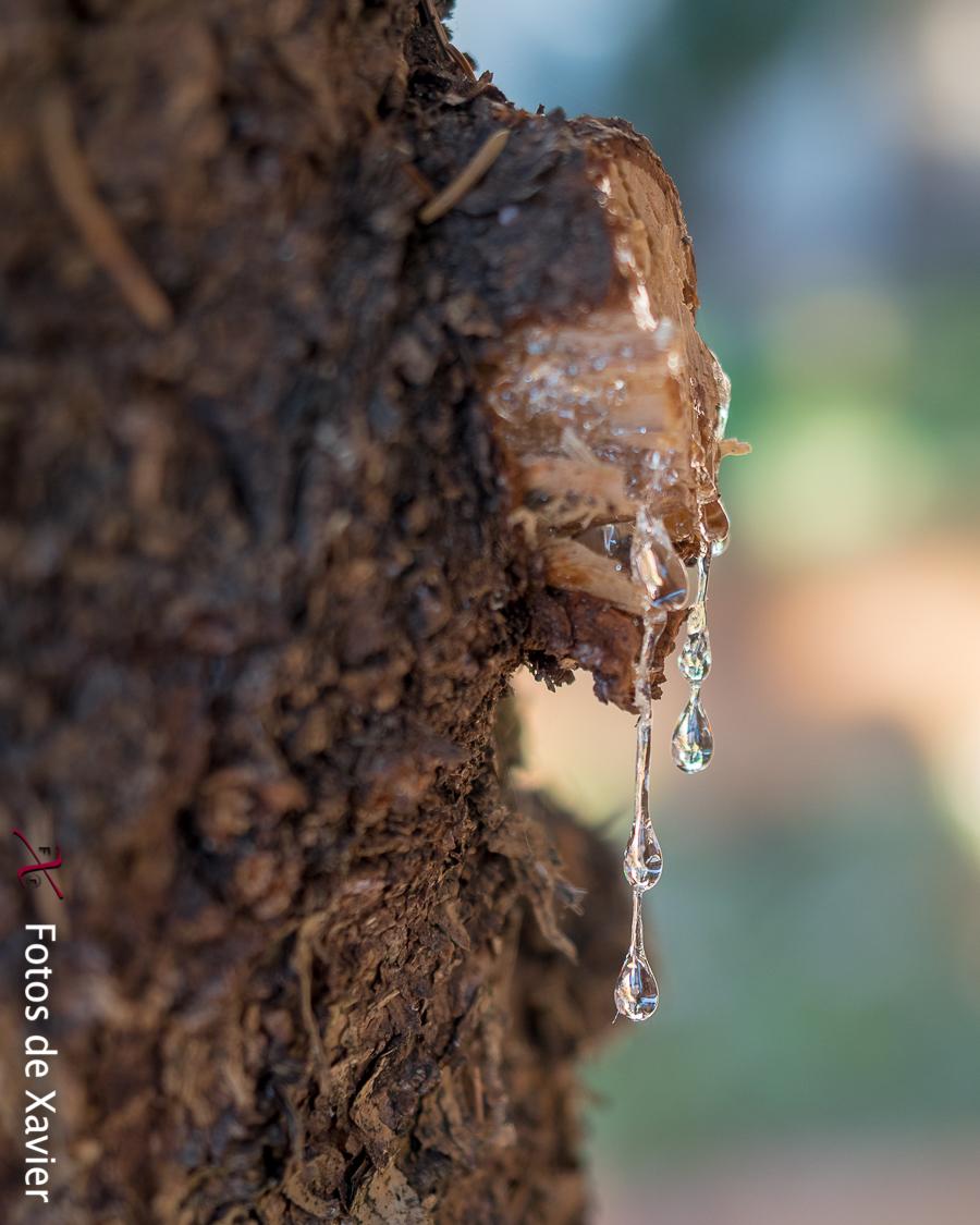 Ferides - Luz - Fotos de Xavier. Fotografia de naturaleza y paisaje. Xavier Linares