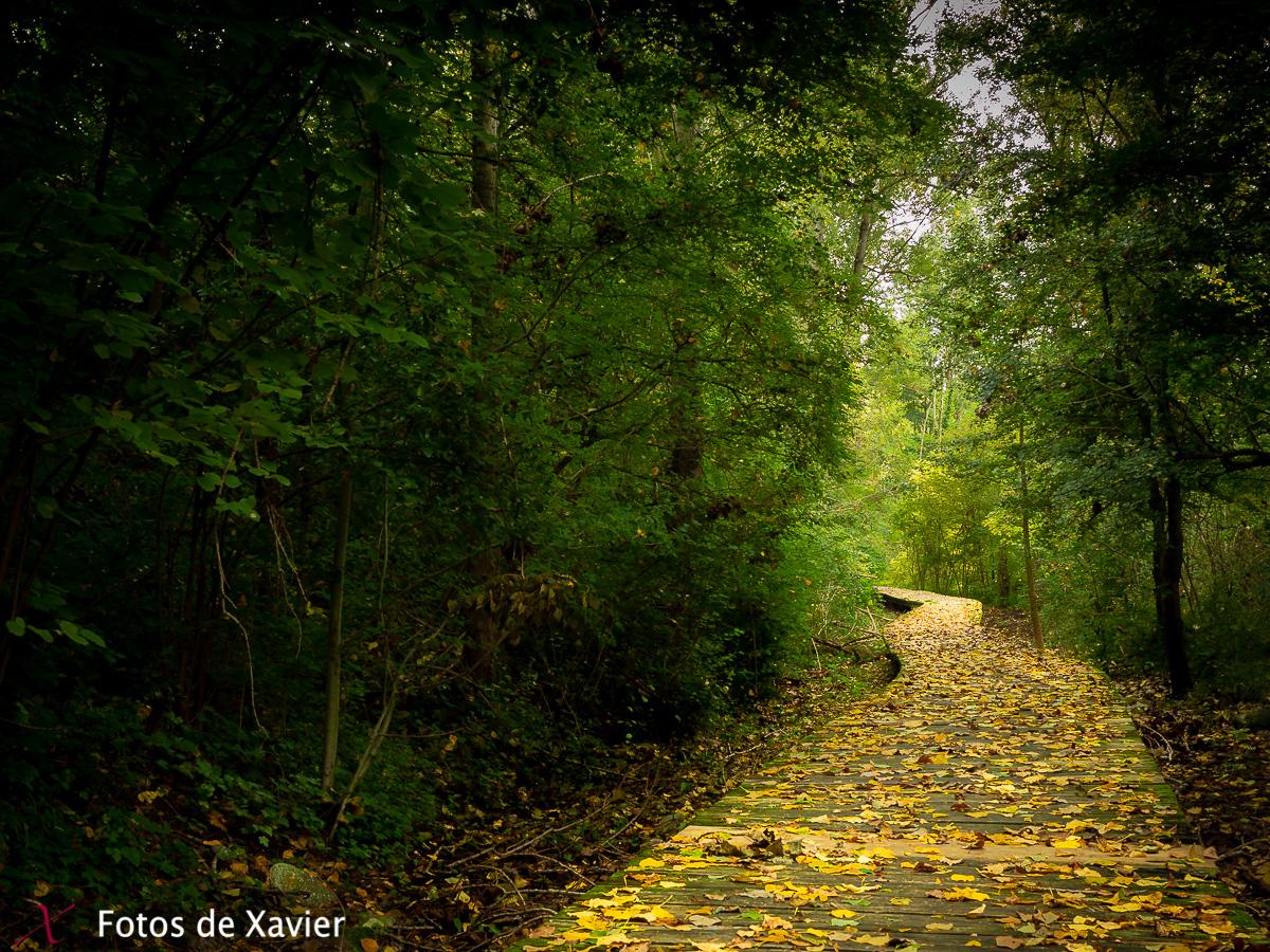 Aurons - Luz - Fotos de Xavier. Fotografia de naturaleza y paisaje. Xavier Linares