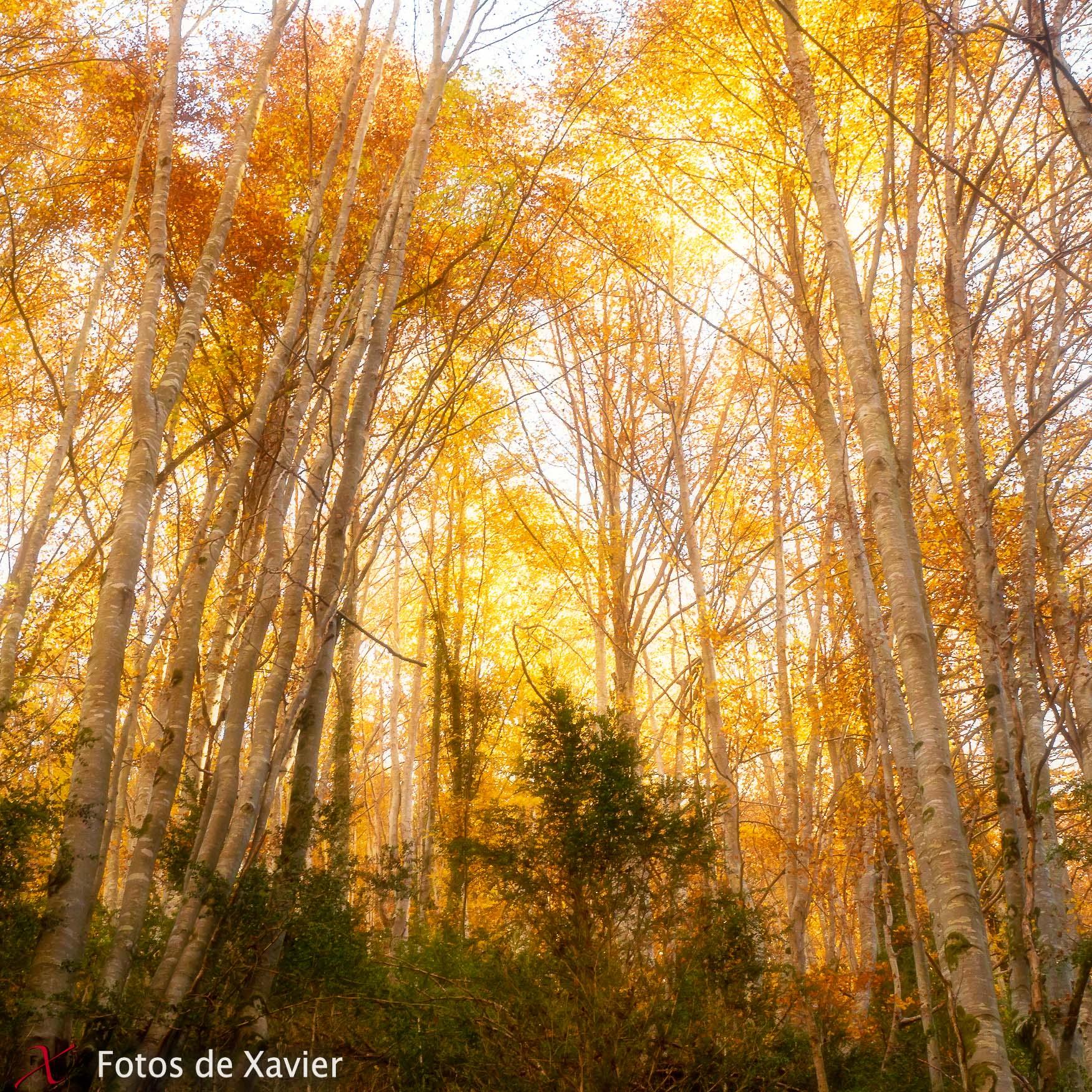 Restes de tardor - Luz - Fotos de Xavier. Fotografia de naturaleza y paisaje. Xavier Linares