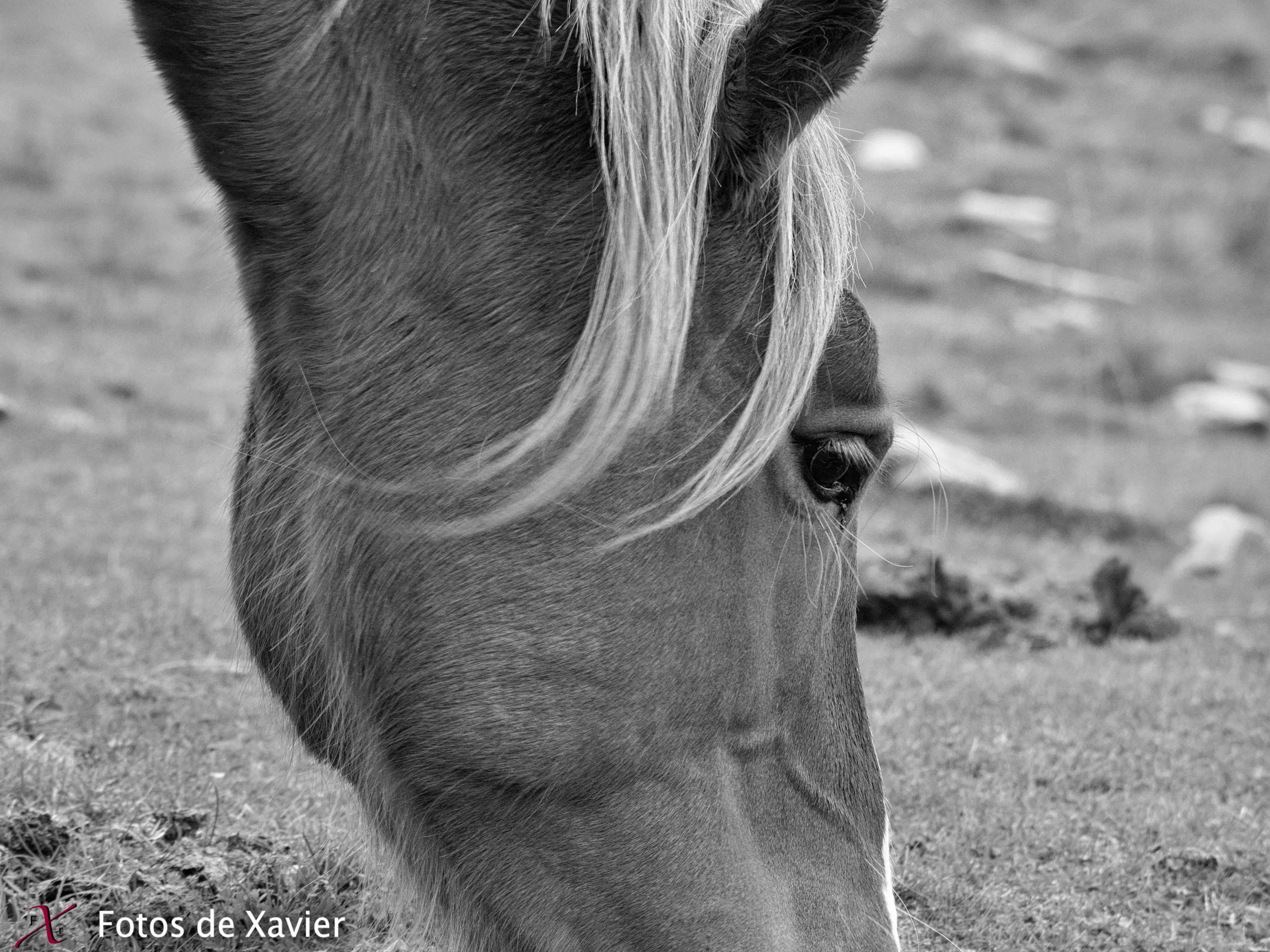 Miradas - Blanco y negro - Fotos de Xavier. Fotografia de naturaleza y paisaje en blanco y negro. Xavier Linares