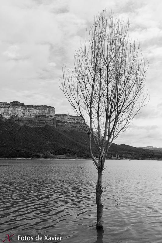El último arbol - Blanco y negro - Fotos de Xavier. Fotografia de naturaleza y paisaje en blanco y negro. Xavier Linares