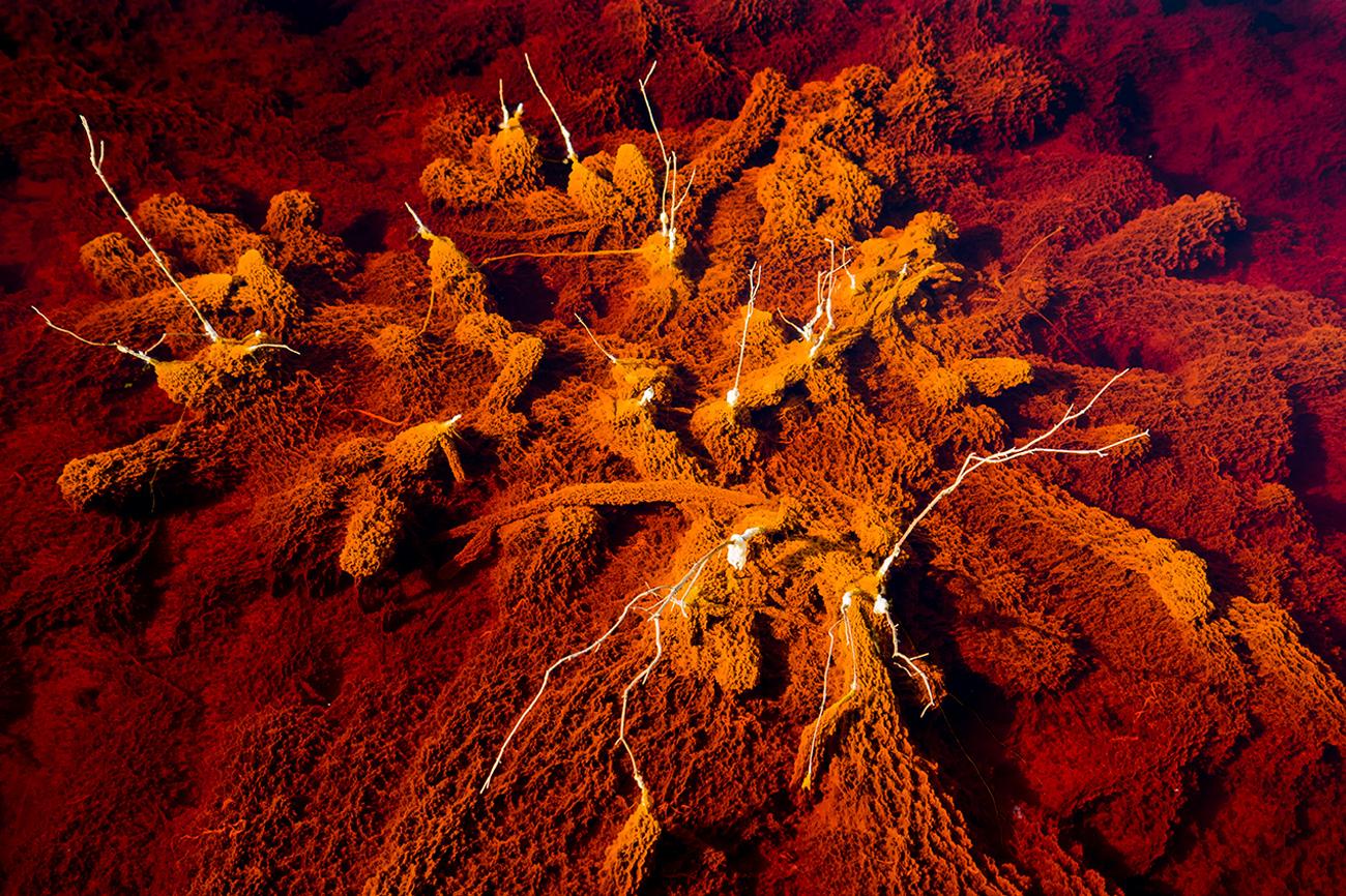 20170819 Rio Tinto - 00220 - El Río Rojo  - Francisco Romero, Wild Photography