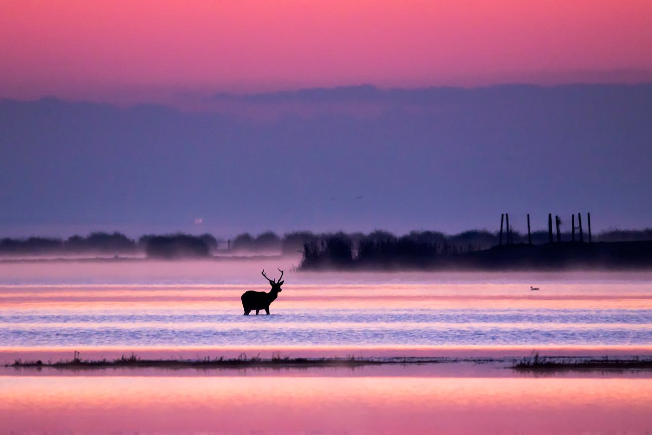 20170108 Doñana - 016 - Mamíferos  - Francisco Romero, Wild Photography