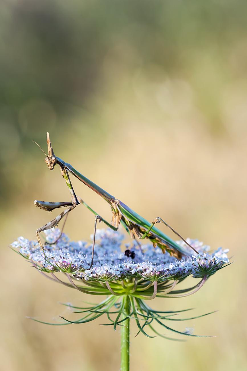 20160521 Doñana - 112 - Macrofotografía - Francisco Romero, Wild Photography