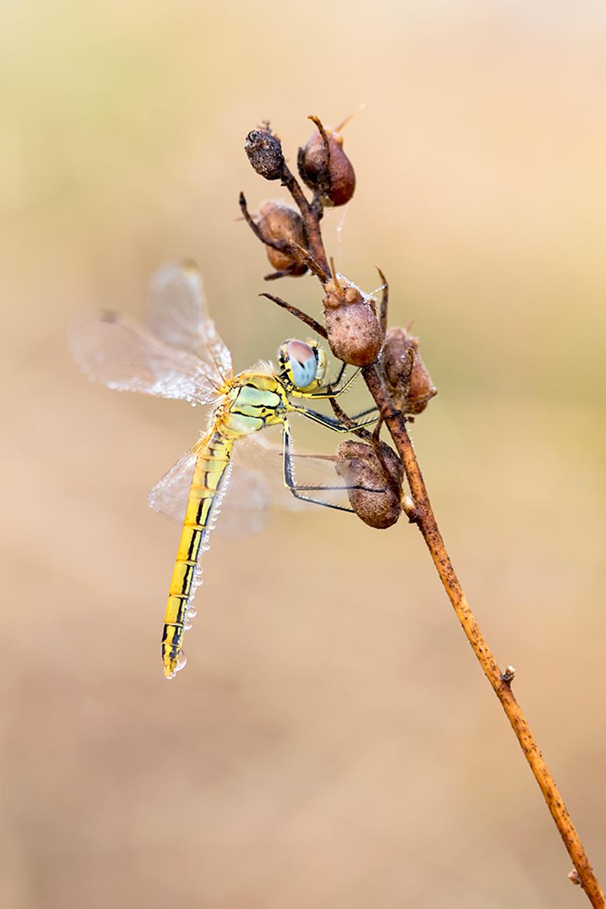 20161008 Doñana - 061 - Macrofotografía - Francisco Romero, Wild Photography