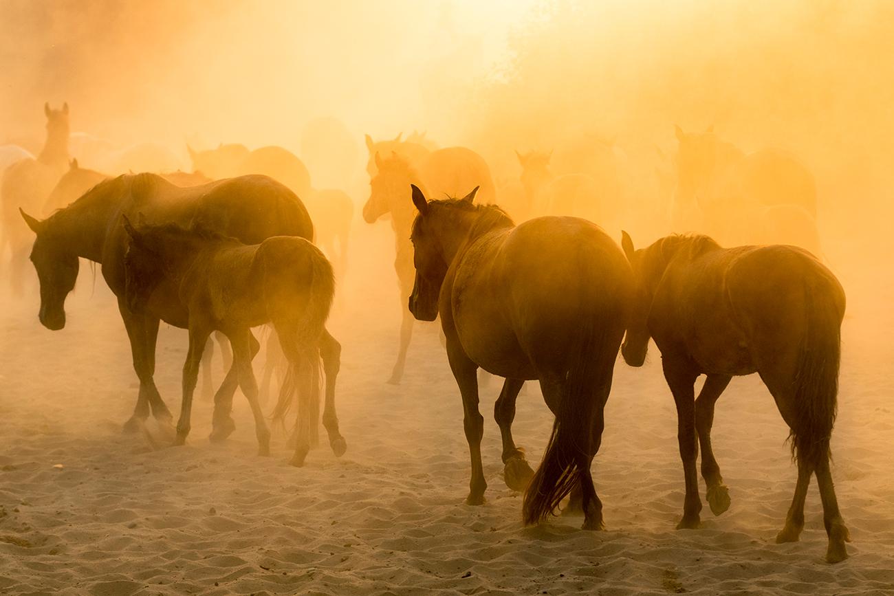 20180625 Doñana - 3433 - Cultura Marismeña - Francisco Romero, Wild Photography