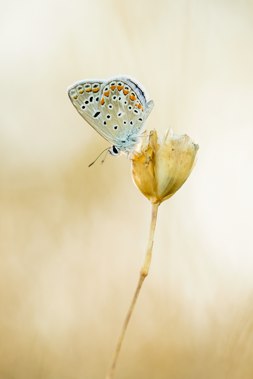 20160713 Doñana - 131 - Macrofotografía - Francisco Romero, Wild Photography