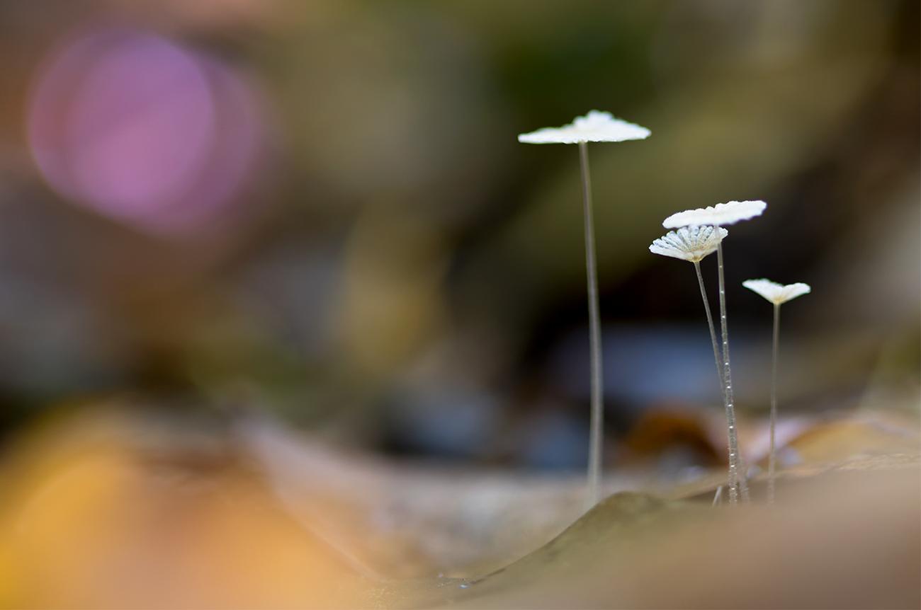 20161106 Doñana - 160 - Setas - Francisco Romero, Wild Photography