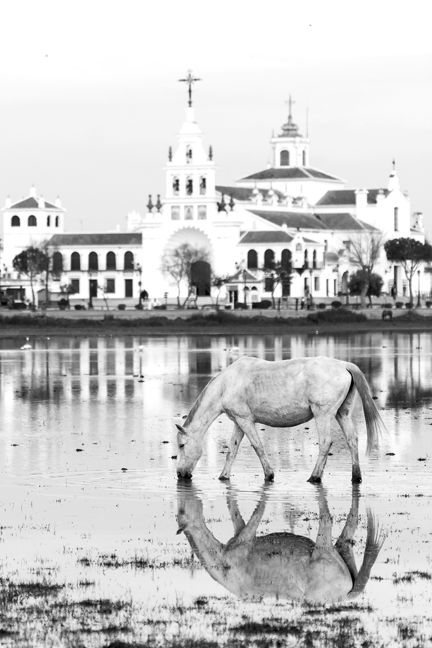 20160202 Doñana - 246 - Cultura Marismeña - Francisco Romero, Wild Photography