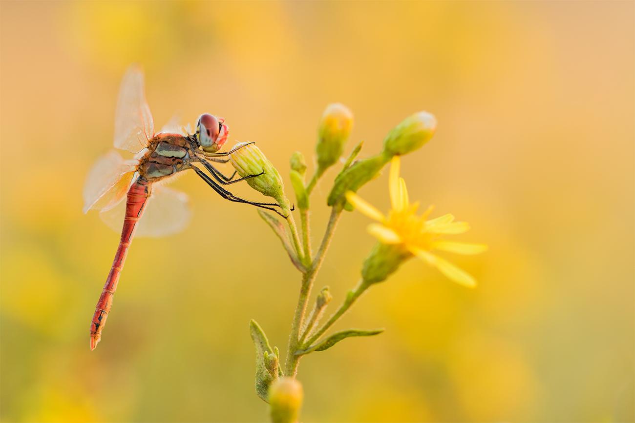 20171008 Doñana - 040 - Macrofotografía - Francisco Romero, Wild Photography