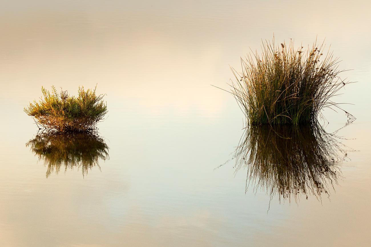 20180923 Delta del Ebro - 027 - Paisaje - FRANCISCO ROMERO, Wild Photography