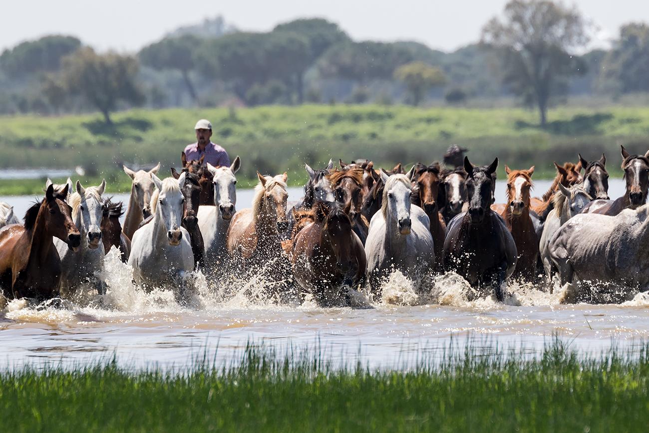 20180427 Doñana - 259 - Cultura Marismeña - Francisco Romero, Wild Photography