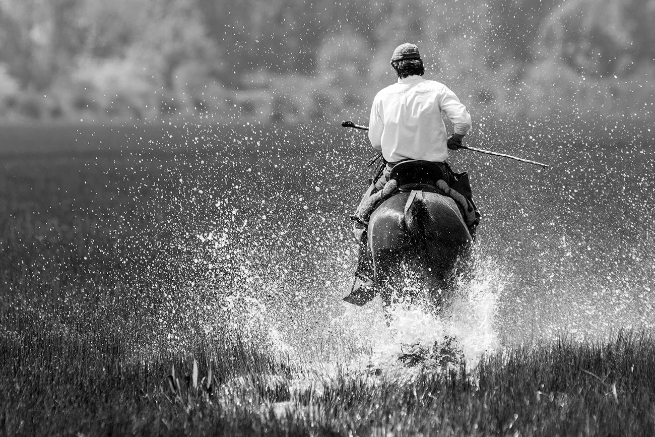20180427 Doñana - 353 - Cultura Marismeña - Francisco Romero, Wild Photography
