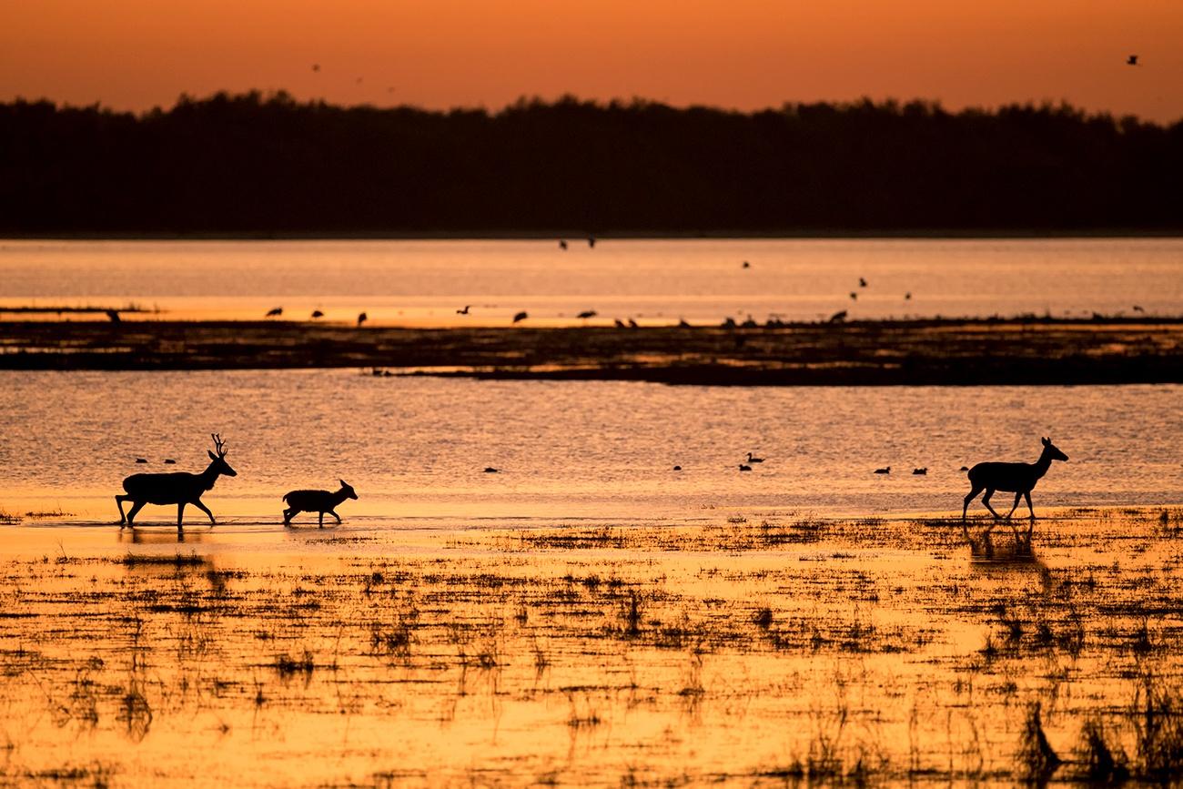 20181220 Doñana - 115 - Mamíferos  - Francisco Romero, Wild Photography