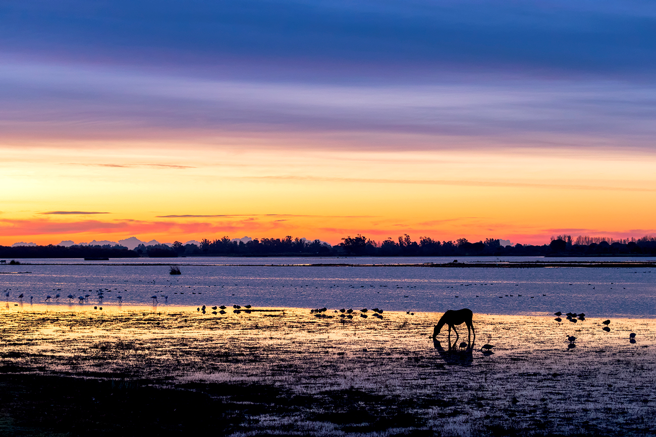20190122 Doñana - 028 - Cultura Marismeña - Francisco Romero, Wild Photography