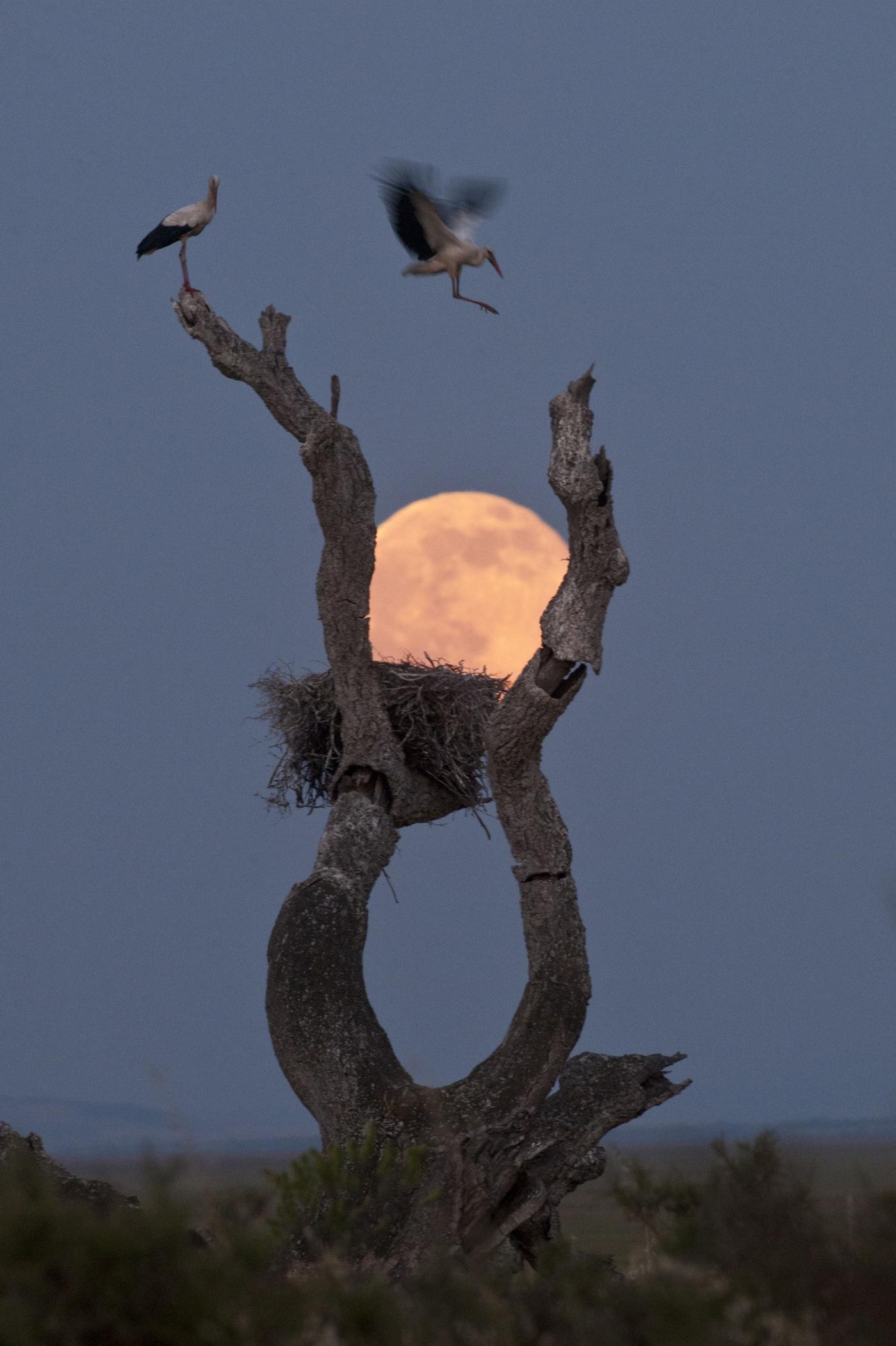Incubar la luna - Prints 3. Gaia - Hector Garrido, Aerial and human photography