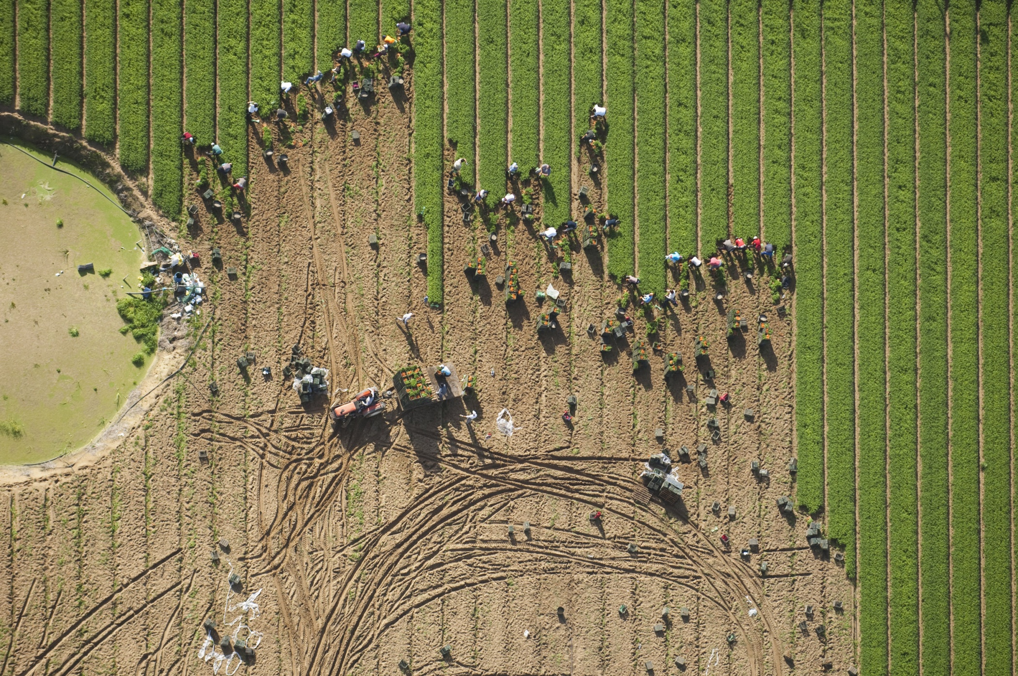 Zanahorias - Prints 1. Aerial nature - Hector Garrido, Aerial and human photography