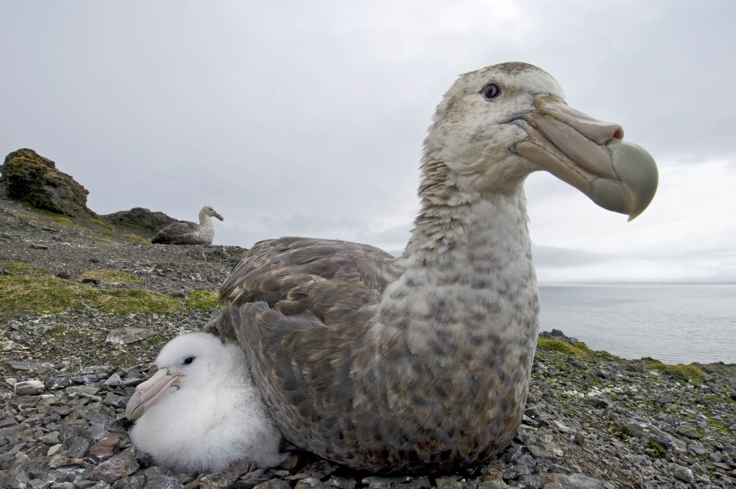 Antártida - Gaia - Hector Garrido, Aerial and human photography