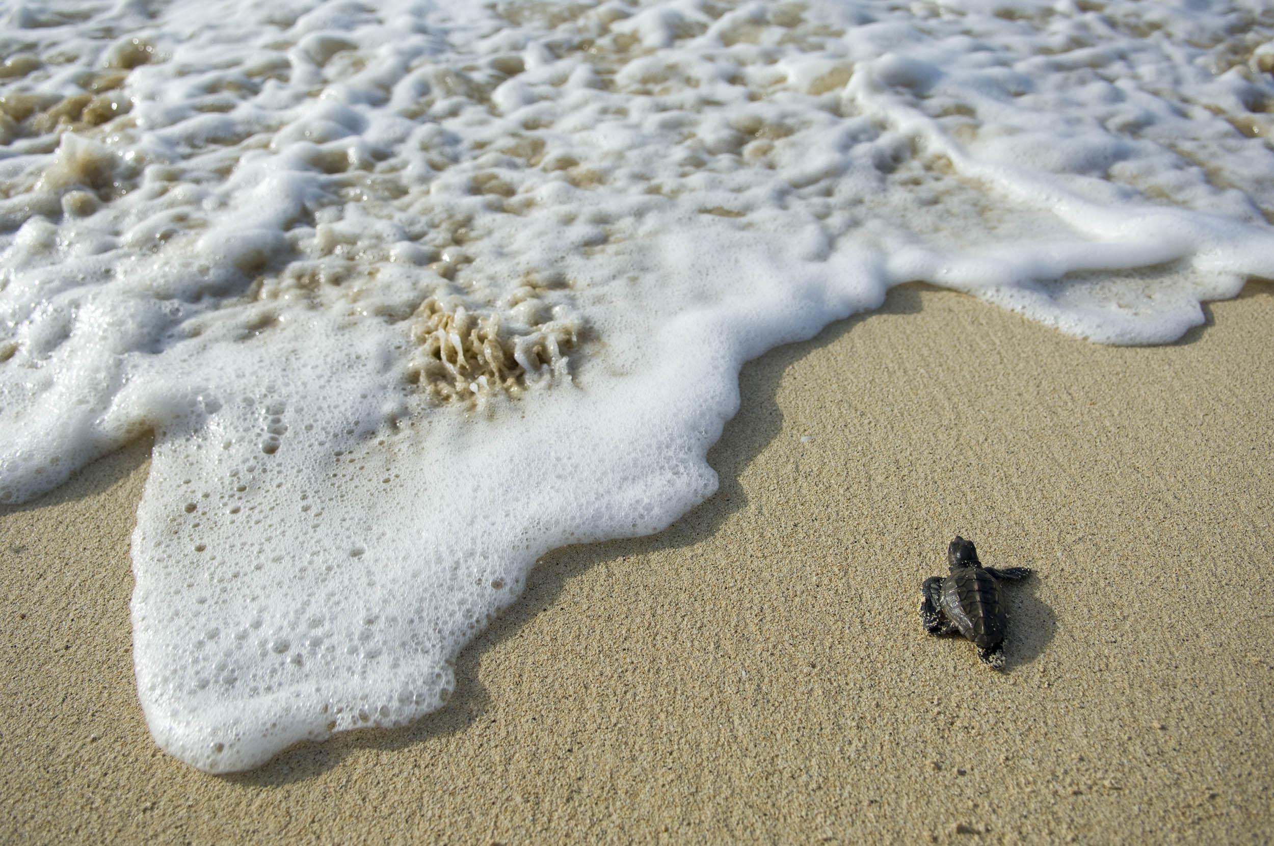 Tortuga boba, Cabo Verde - Gaia - Hector Garrido, Aerial and human photography