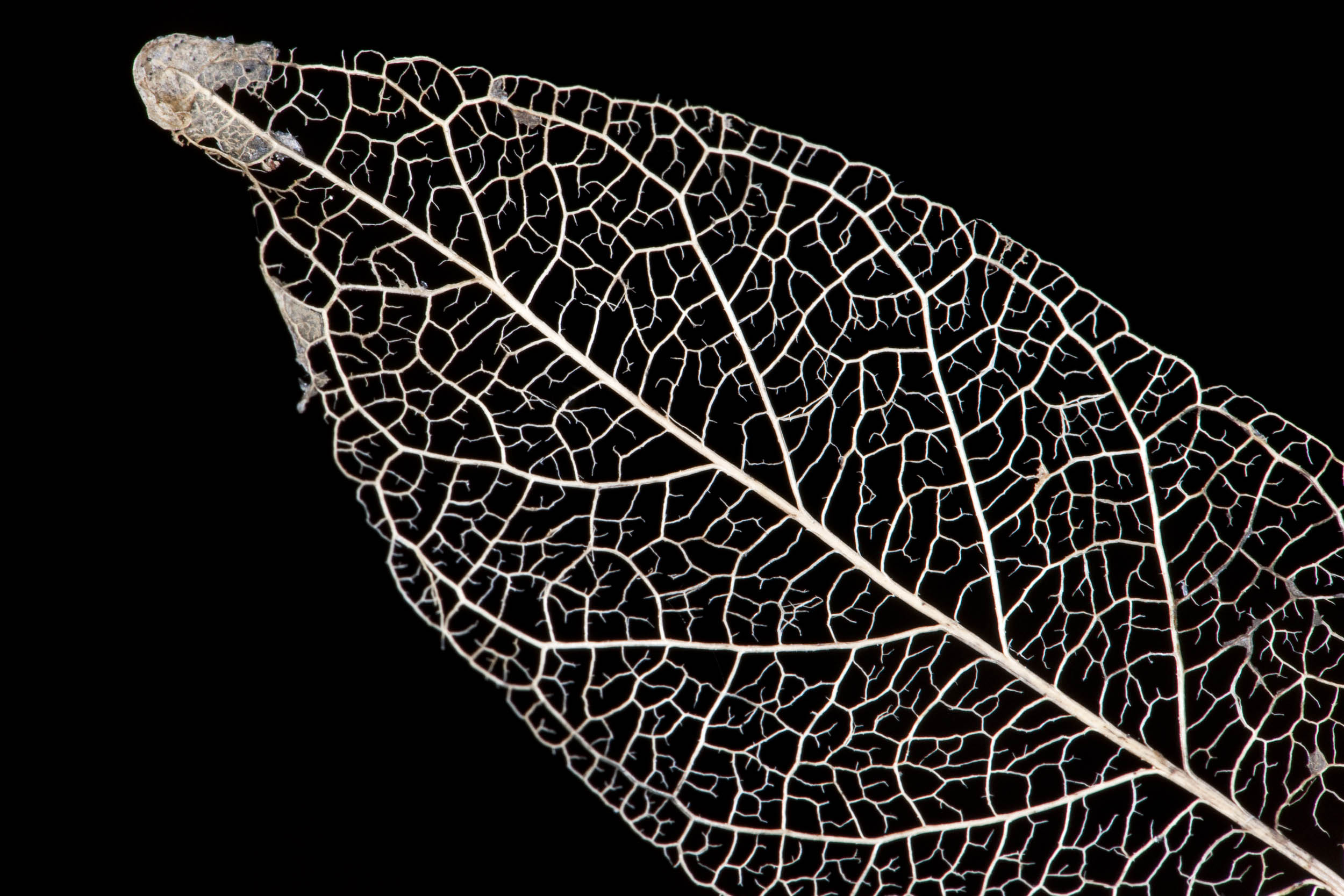 Estructura, Australia - Gaia - Hector Garrido, Aerial and human photography
