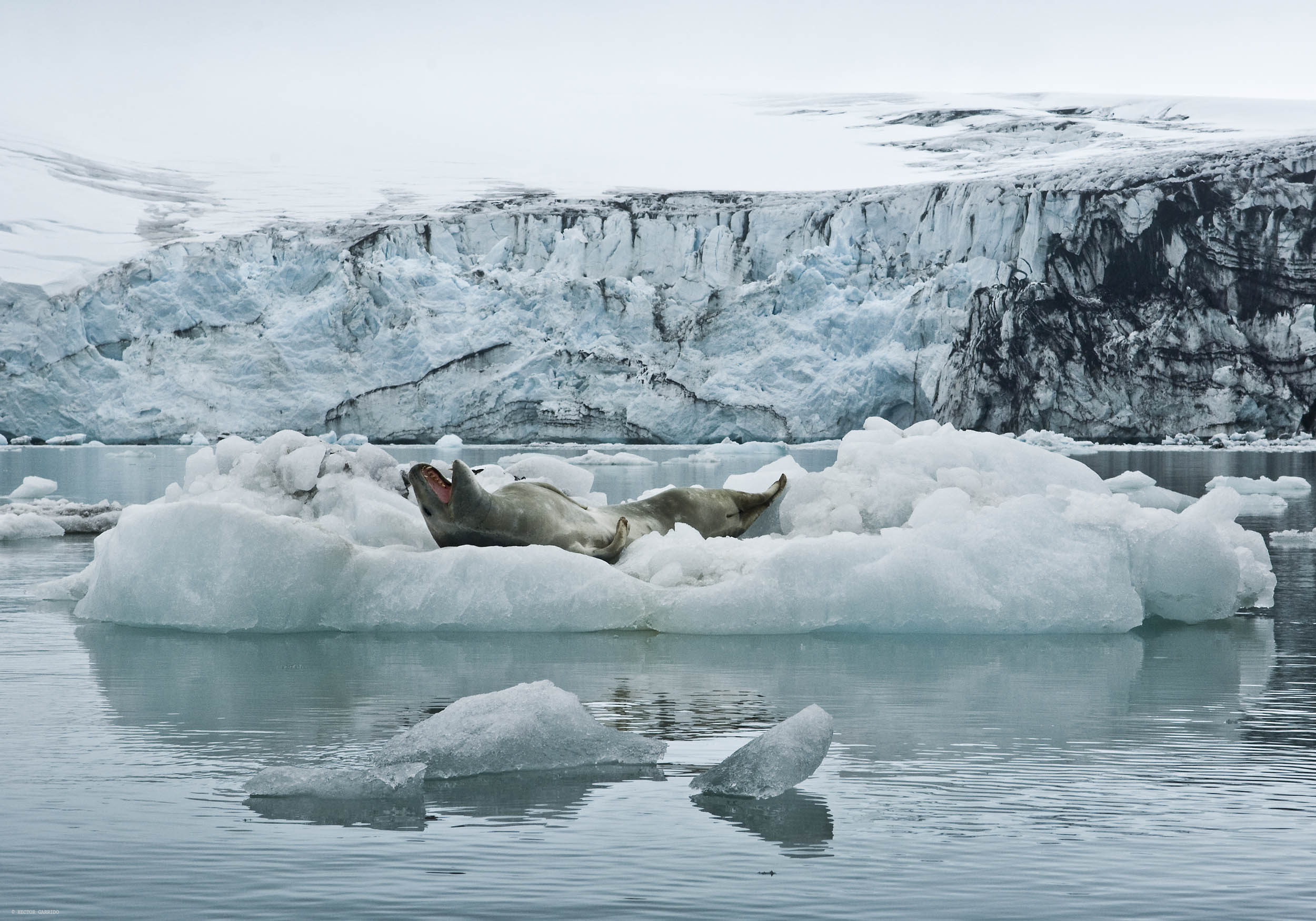 Foca leopardo, Antártida - Gaia - Hector Garrido, Aerial and human photography