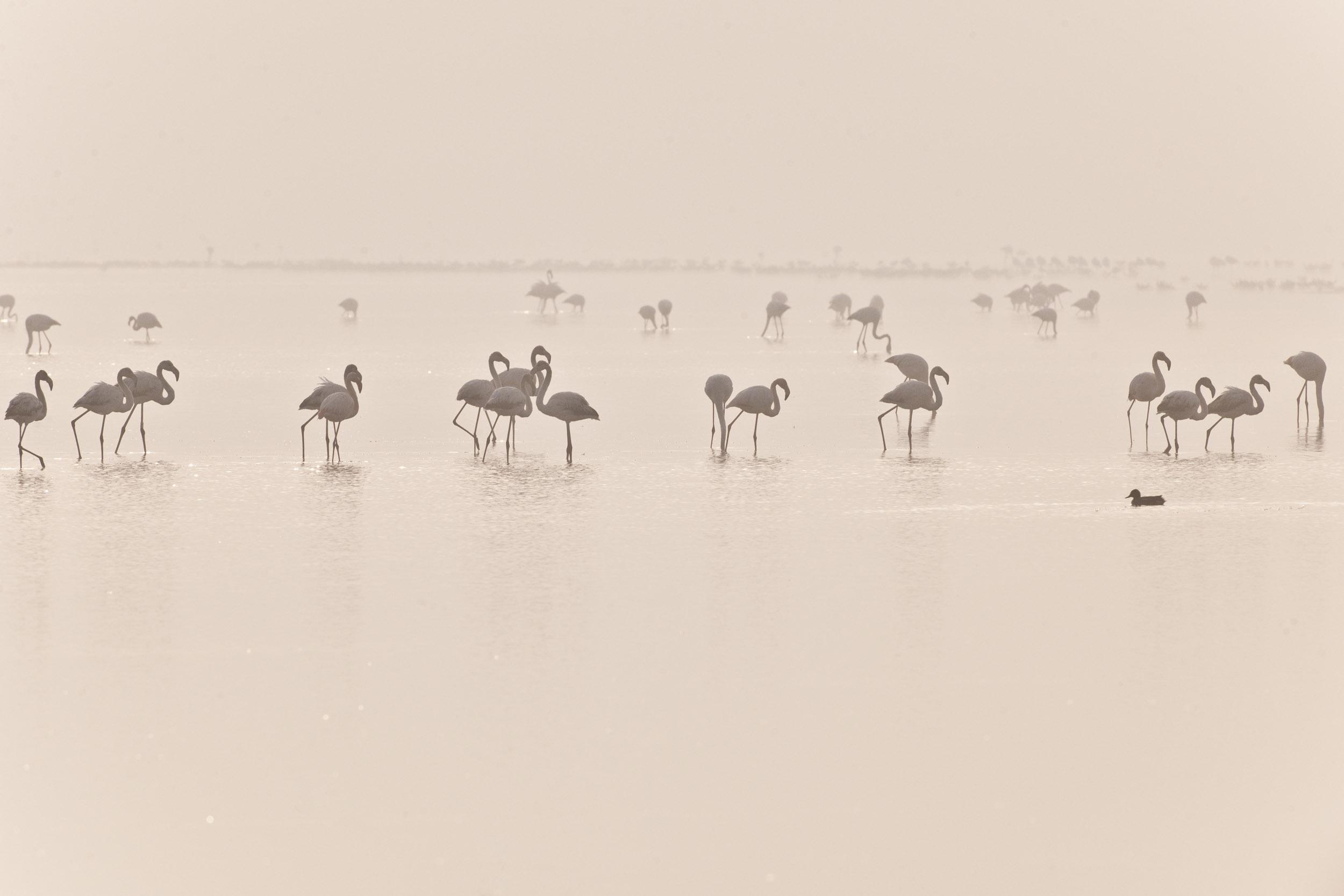 Gaia - Hector Garrido, Aerial and human photography