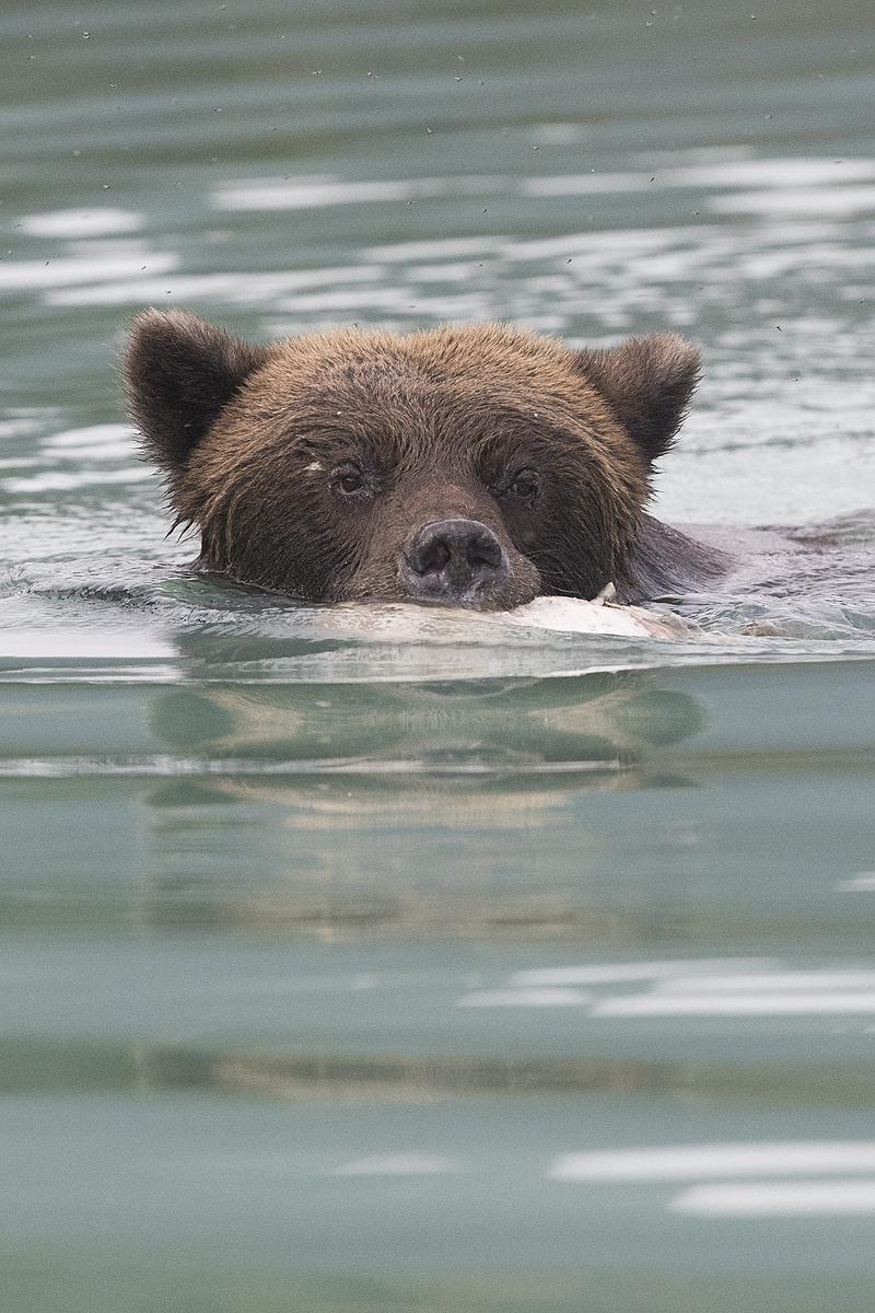 Alaska - Iñigo Bernedo, Fotografía