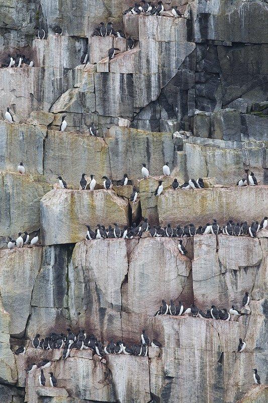 Svalbard colonia de aves - Svalbard - Iñigo Bernedo, Fotografía