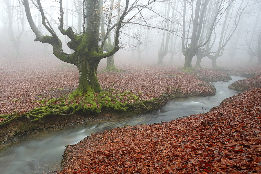 Gorbea Bizkaia - Bosques - Iñigo Bernedo, Fotografía