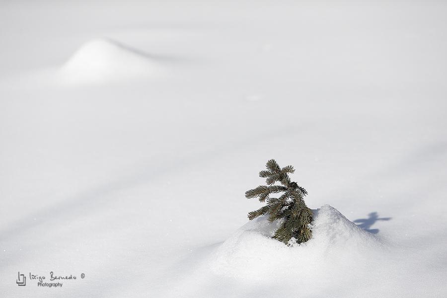 Columbia Icefields, Jasper National Park - Canada, Abraham Lake - Iñigo Bernedo, Fotografía