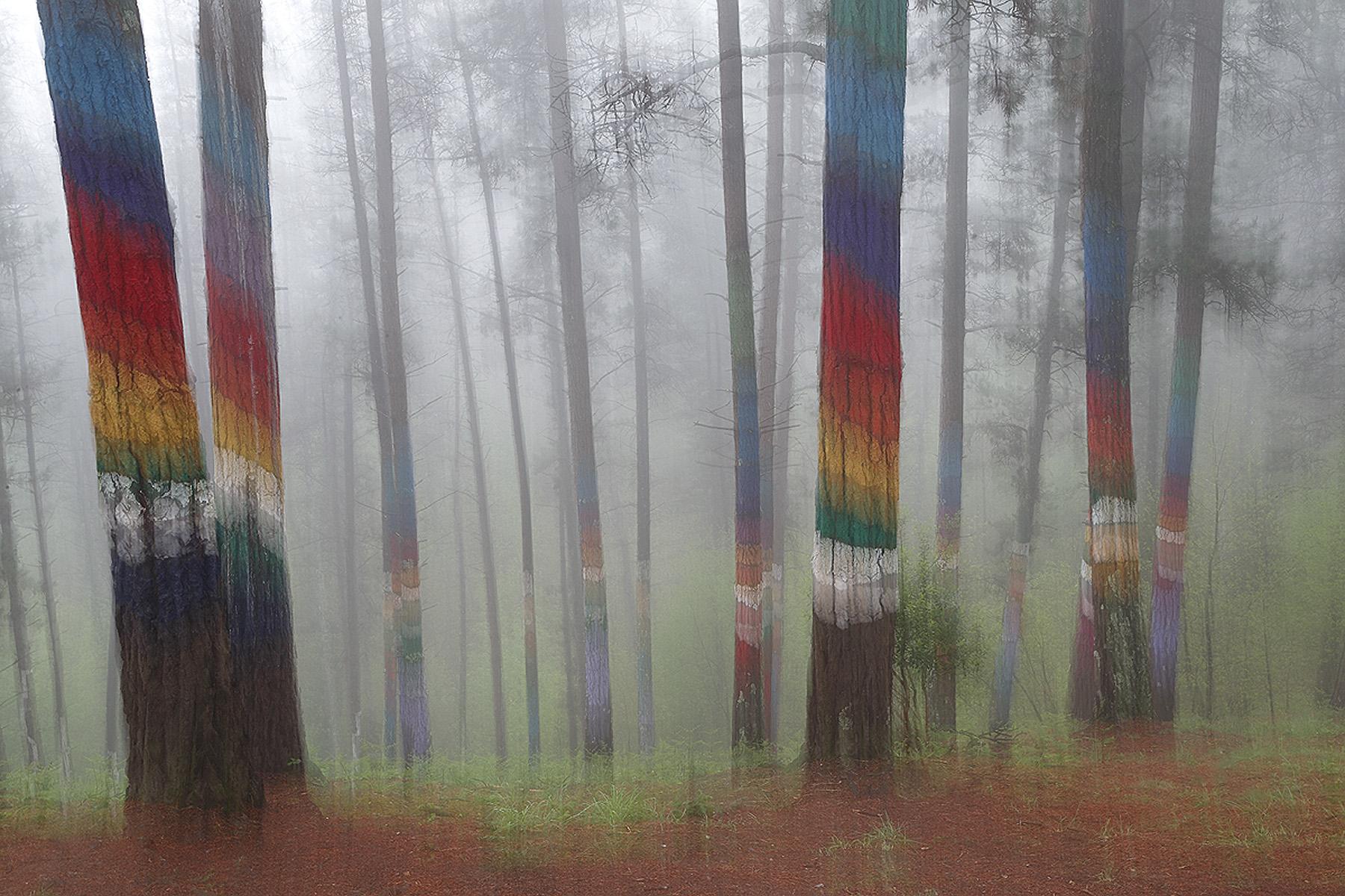 Bosque de Oma, Bizkaia - Bosques - Iñigo Bernedo, Fotografía