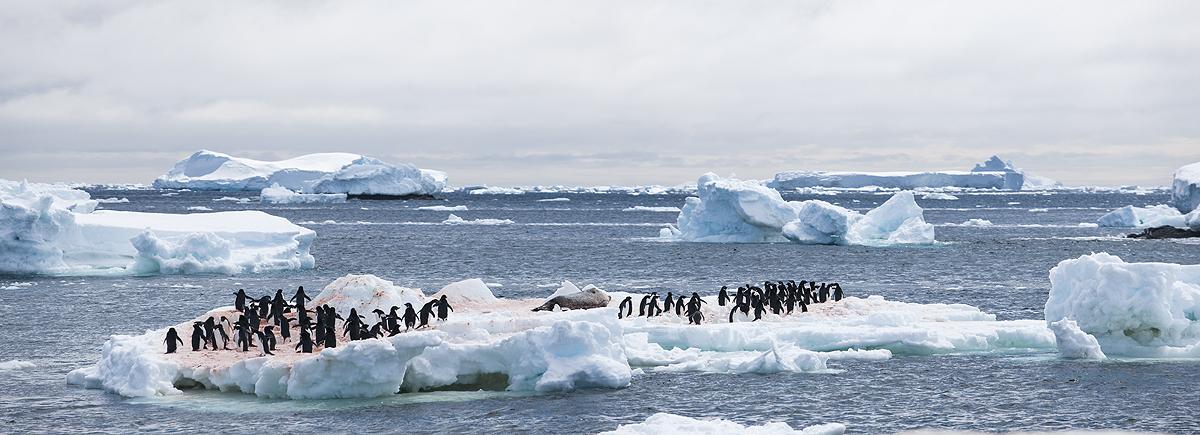 Gourdin  - Antártida - Iñigo Bernedo, Fotografía