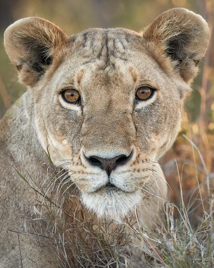 Masai Mara - Isaac Loiola, Photography