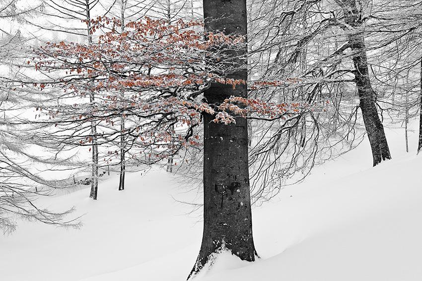 Duru - Natura - Iosu Garai, Argazkilaria - Fotógrafo