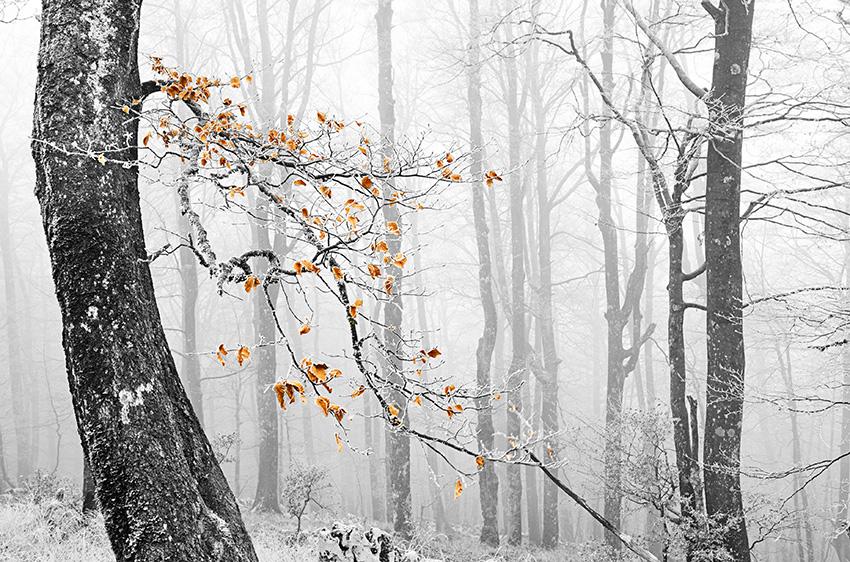 Neguko koloreak - Natura - Iosu Garai, Argazkilaria - Fotógrafo