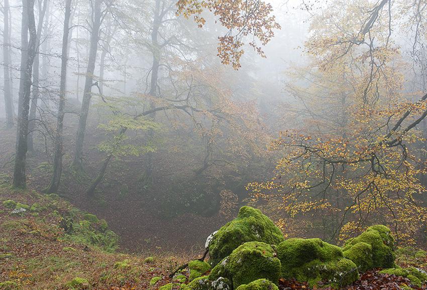 Urbasako lainoartean - Natura - Iosu Garai, Argazkilaria - Fotógrafo