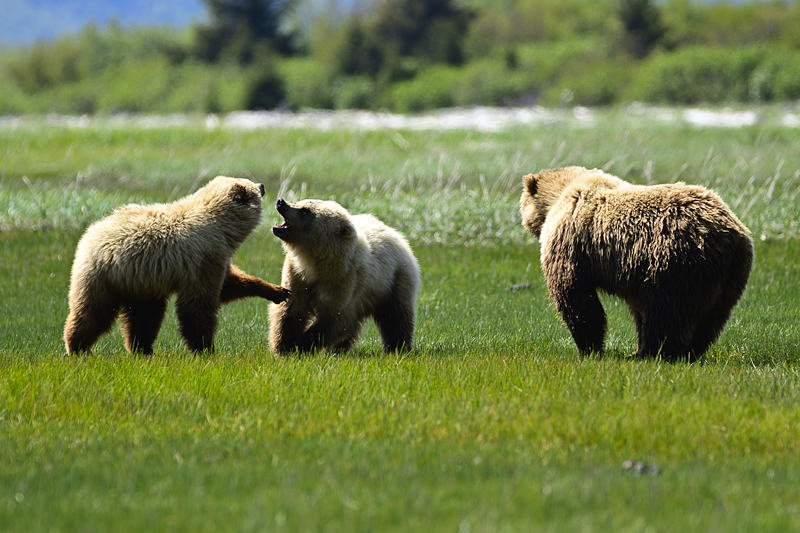 ALASKA - Natura - Iosu Garai, Argazkilaria - Fotógrafo