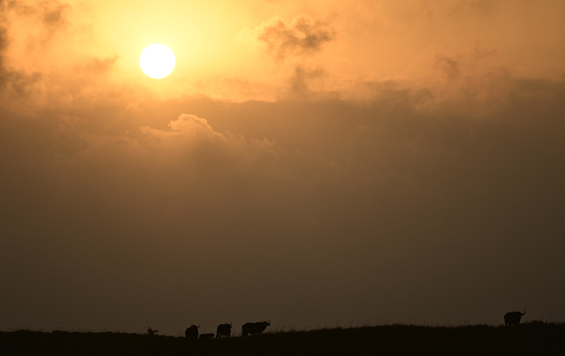 SUDAFRICA - Natura - Iosu Garai, Argazkilaria - Fotógrafo