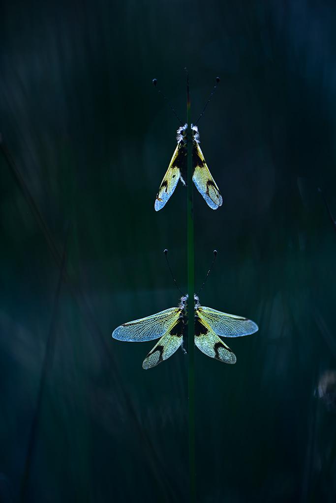 Natura - Iosu Garai, Argazkilaria - Fotógrafo
