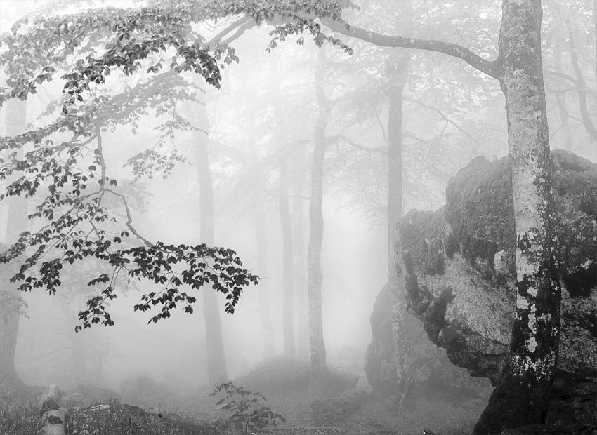 URBASA - Natura - Iosu Garai, Argazkilaria - Fotógrafo