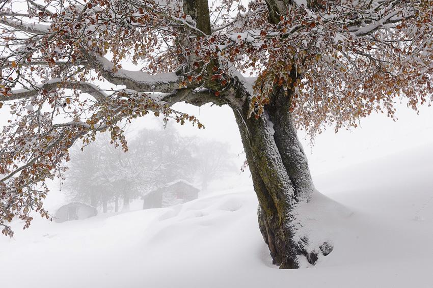 ARBELAR - Mendía-Montaña - Iosu Garai, Argazkilaria - Fotógrafo