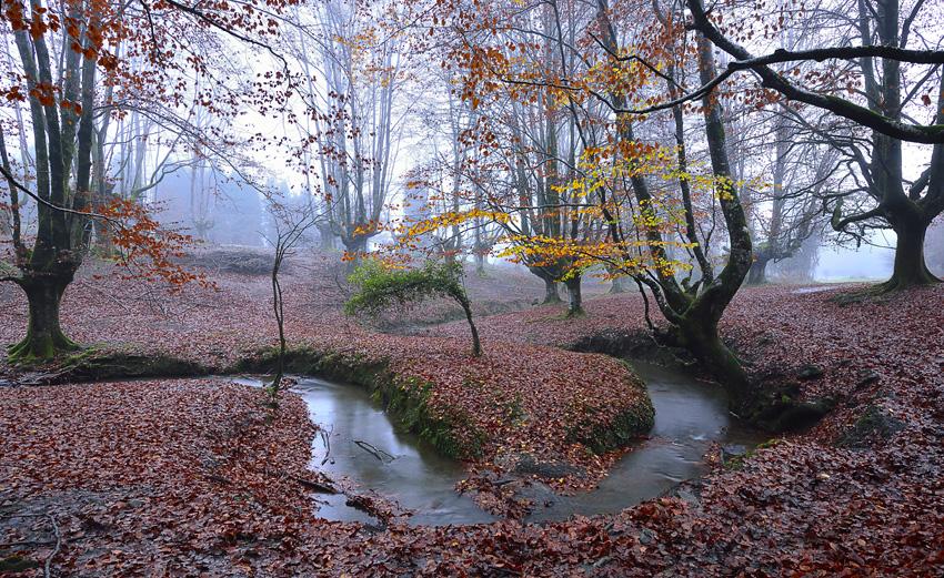 Otzarreta - Natura - Iosu Garai, Argazkilaria - Fotógrafo